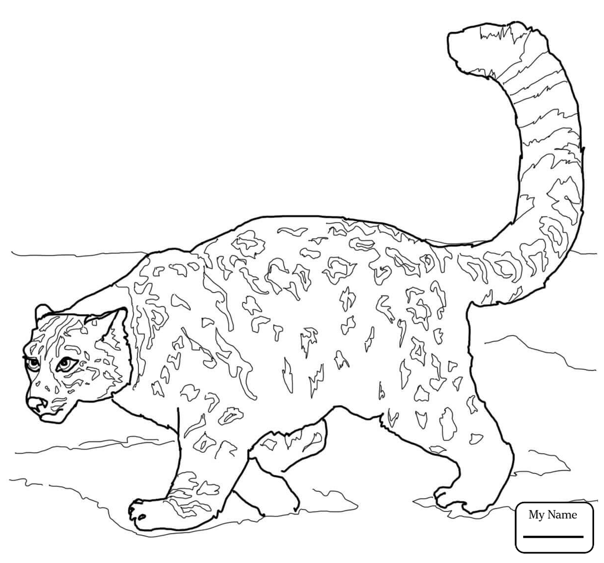 Baby Leopard Coloring Pages At Getcolorings