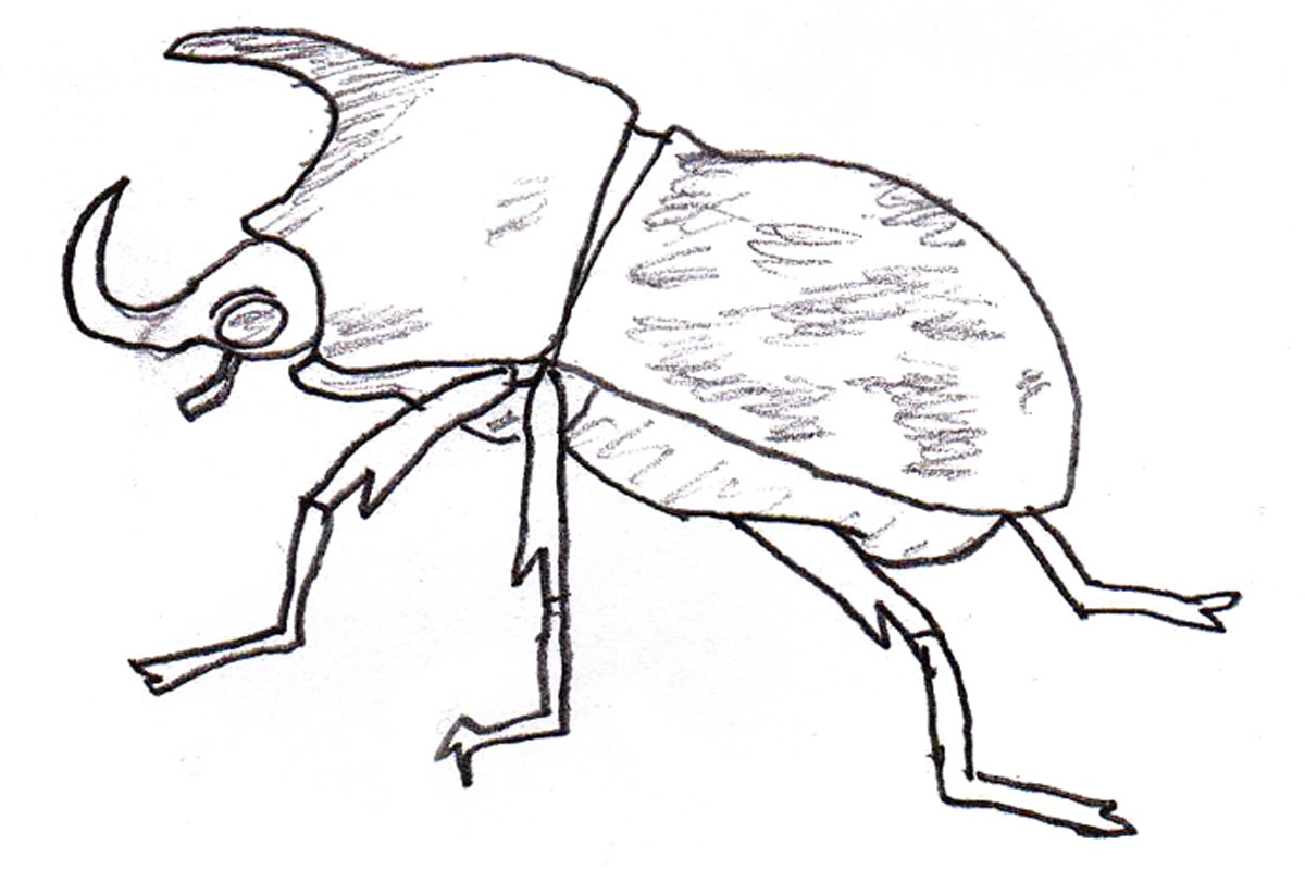 Beetle Coloring Page At Getcolorings