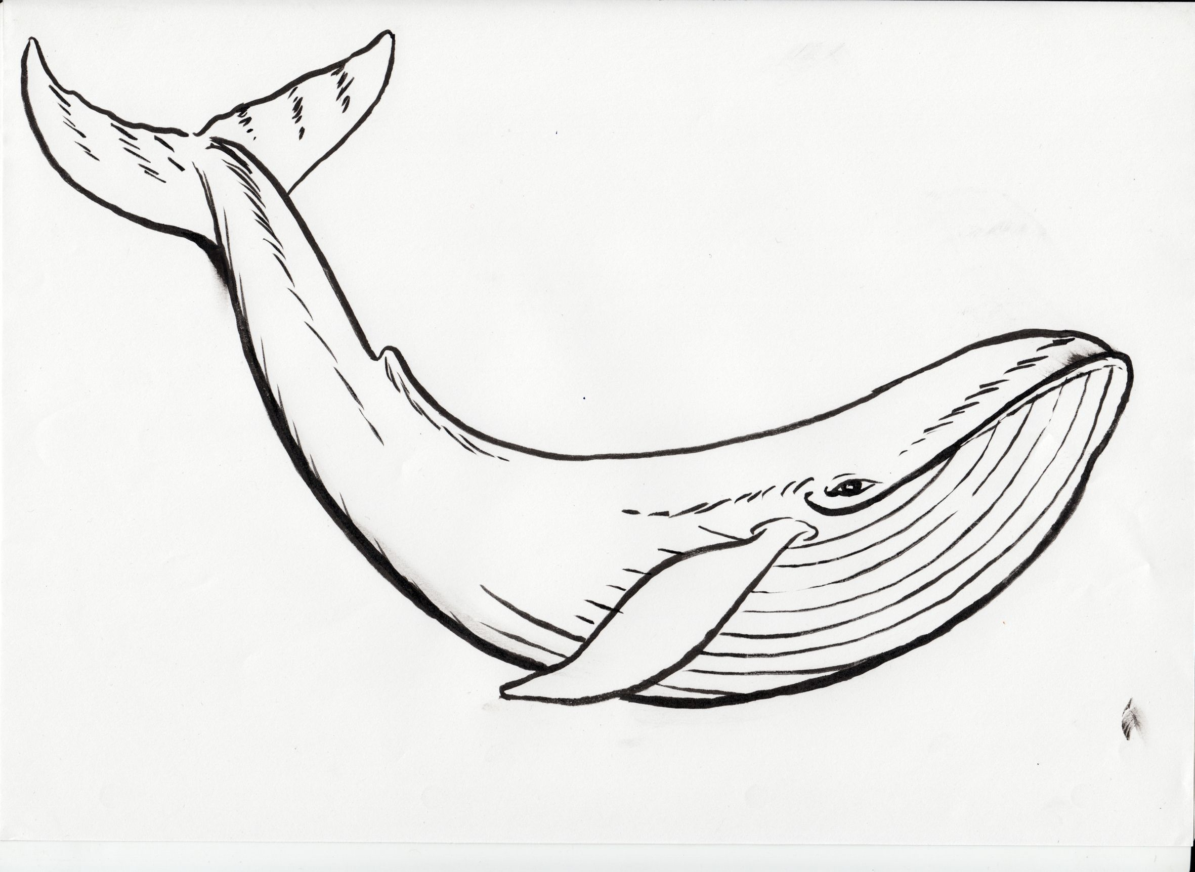 Blue Whale Coloring Page At Getcolorings
