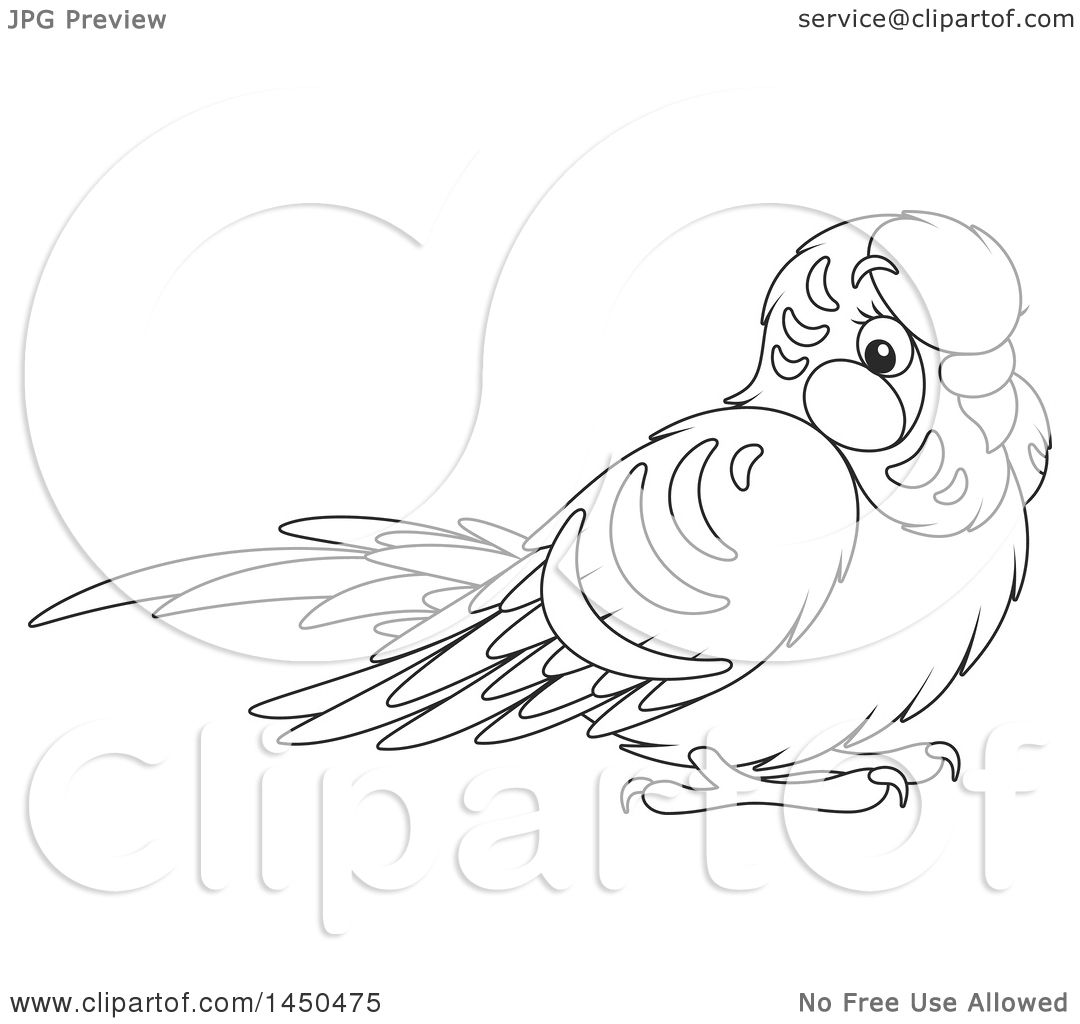 Budgie Coloring Pages At Getcolorings