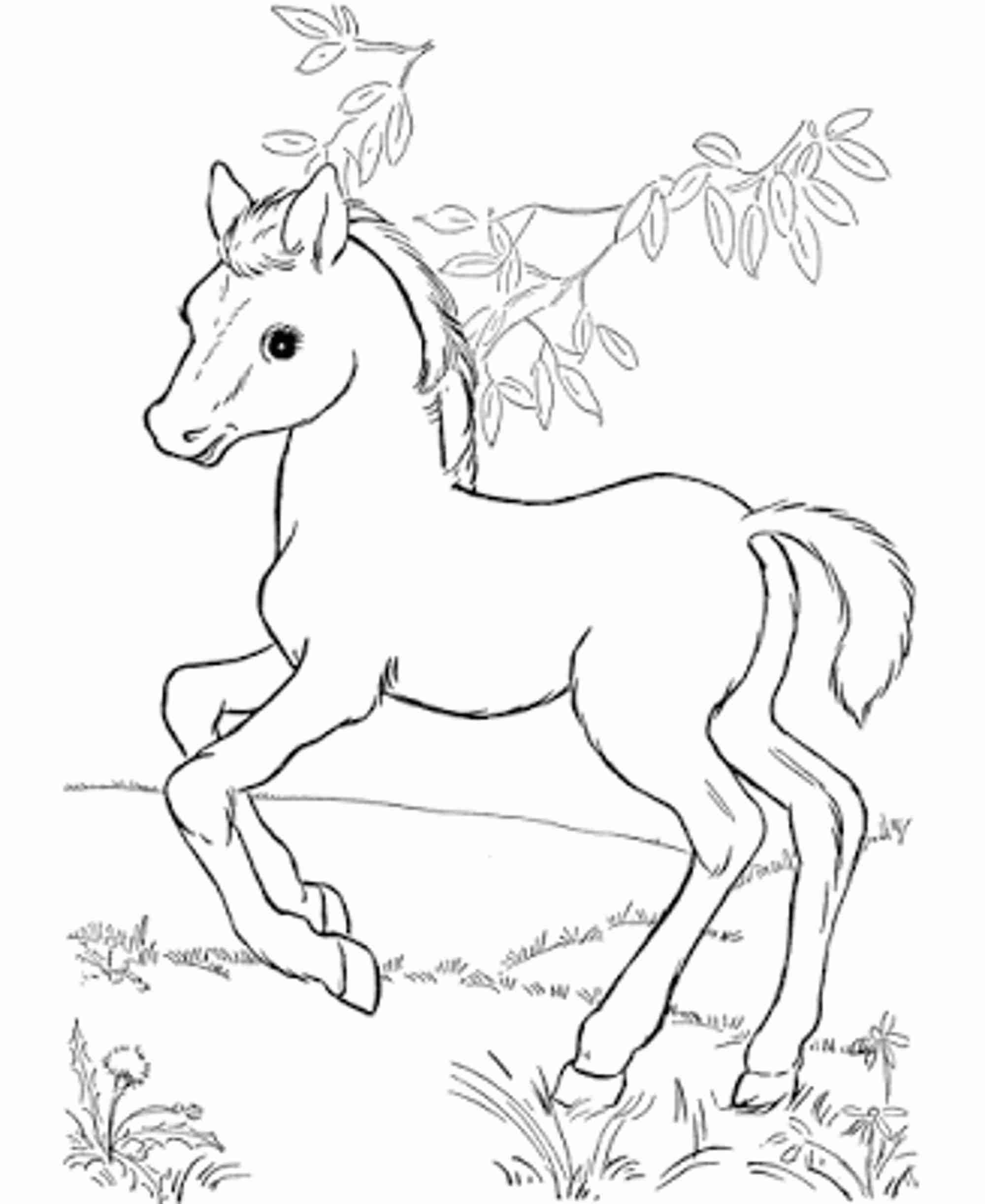 Cute Horse Coloring Pages At Getcolorings