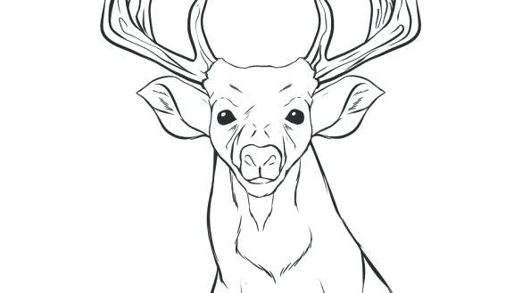 deer head coloring pages at getcolorings  free