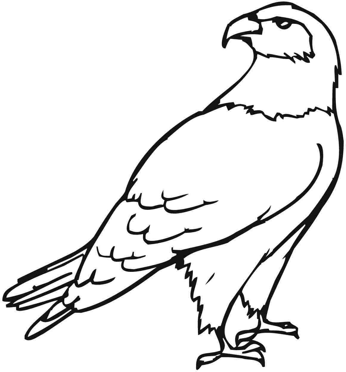 Eagle Coloring Pages For Adults At Getcolorings