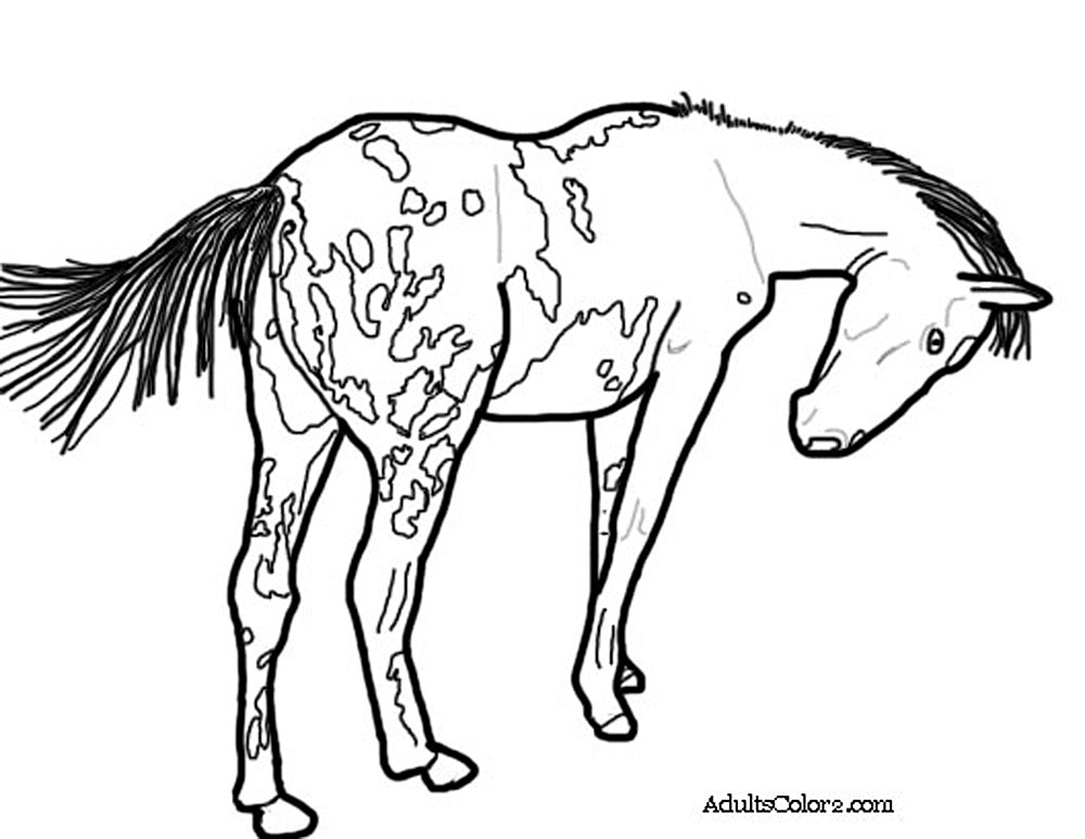 Coloring Gypsy Pages Vanner Horse