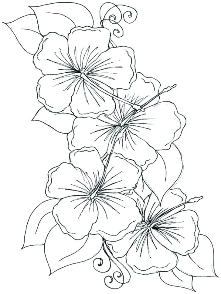 hawaiian flower coloring page at getcolorings  free