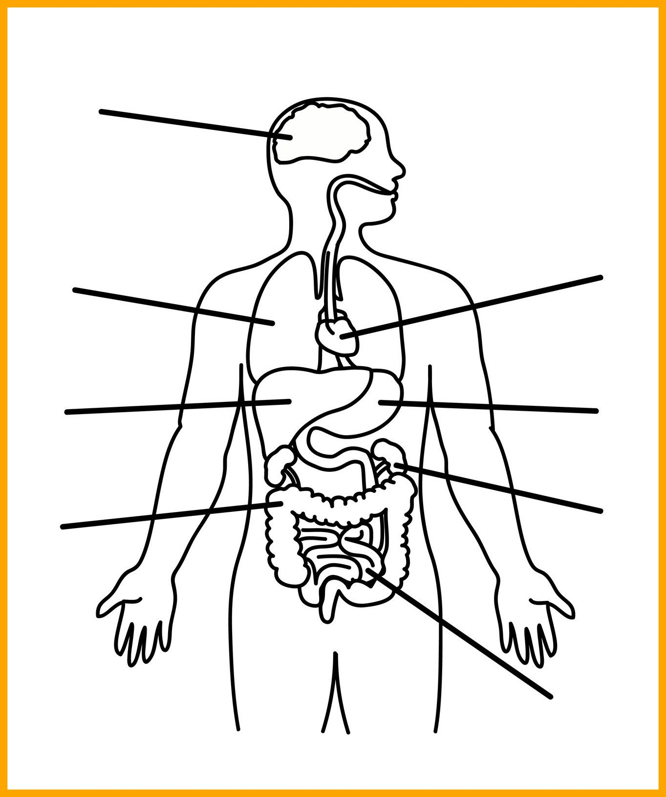 Human Body Coloring Pages For Kids At Getcolorings