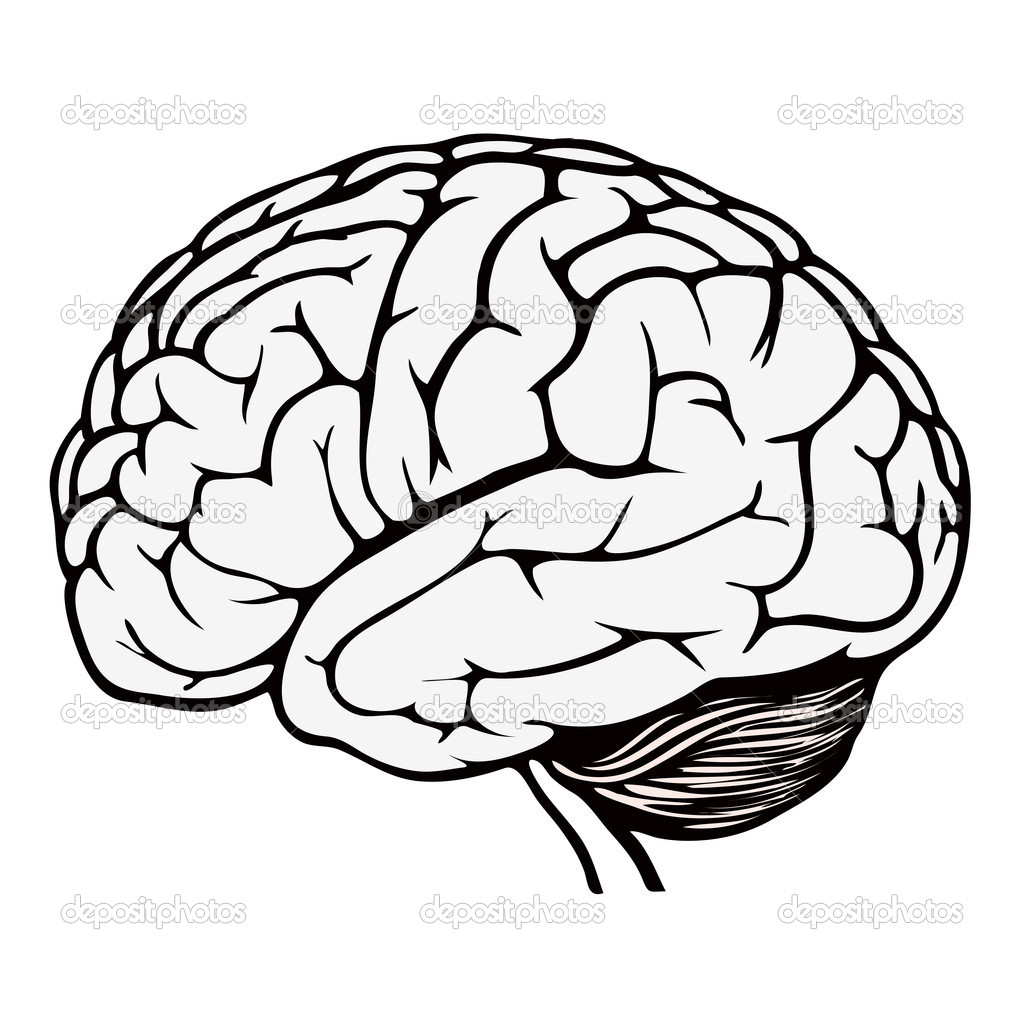 Human Brain Coloring Page At Getcolorings
