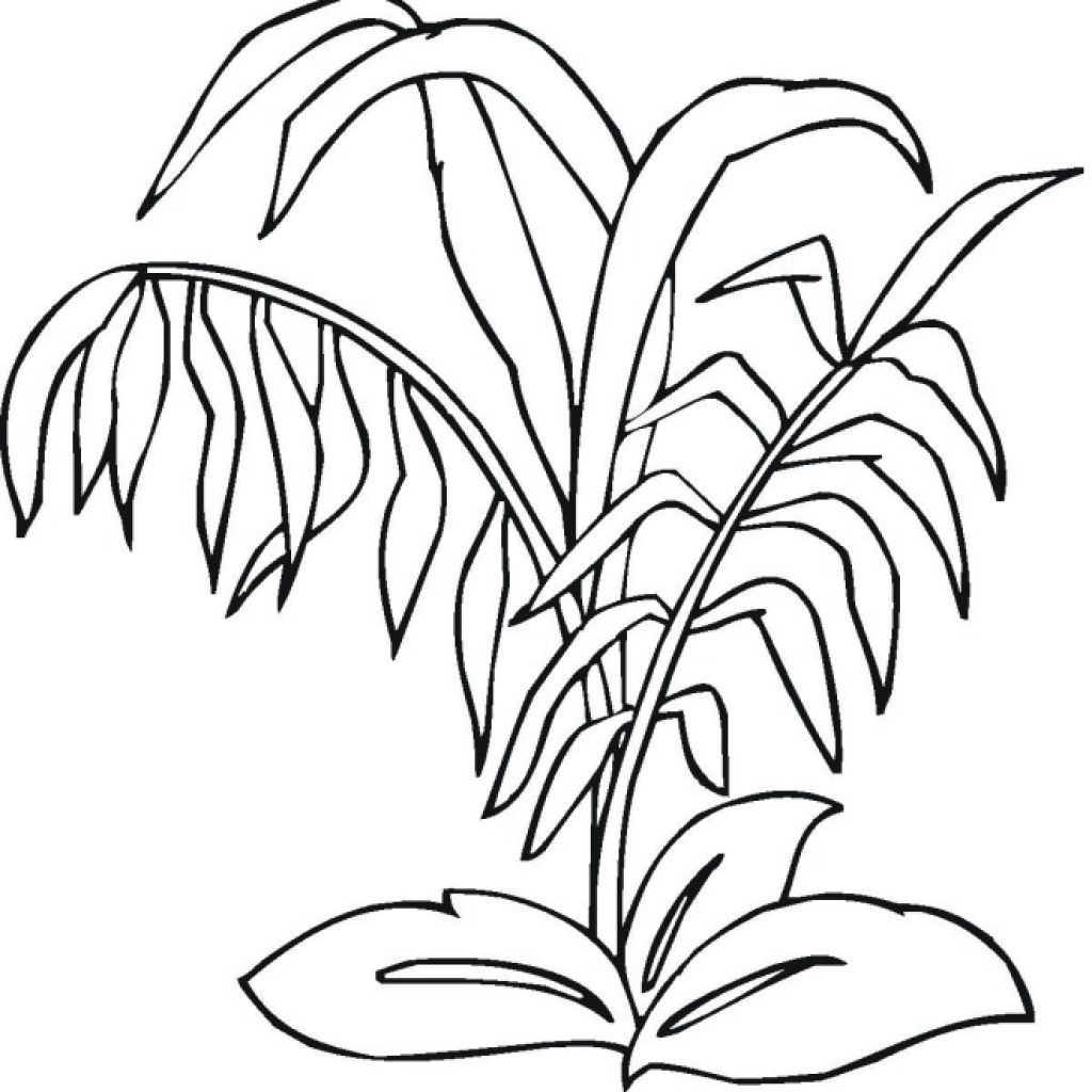 Jungle Plants Coloring Pages At Getcolorings