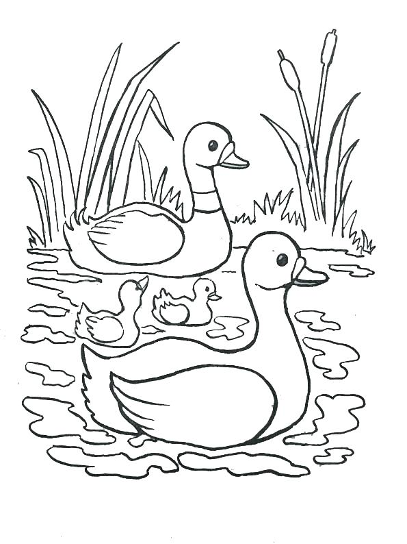 nile river coloring page at getcolorings  free