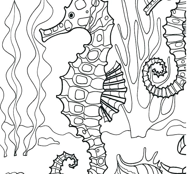 otter coloring pages at getcolorings  free printable