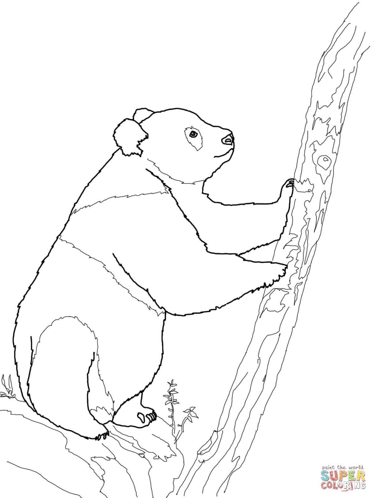 Panda Bear Coloring Pages At Getcolorings