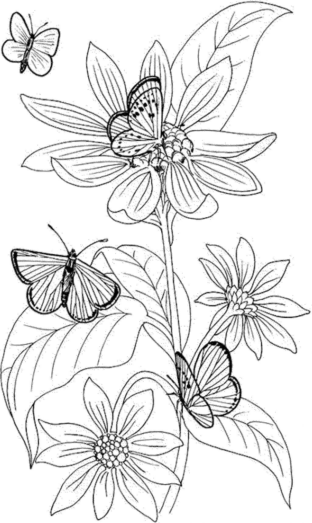 Pansy Flower Coloring Page At Getcolorings