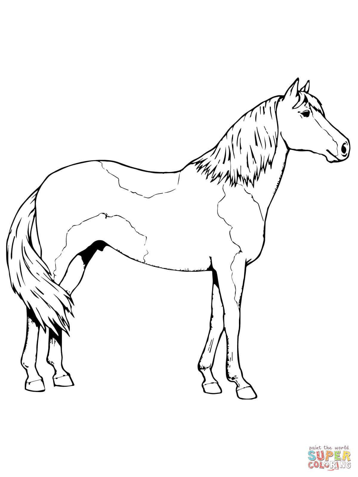 Pinto Horse Coloring Pages At Getcolorings