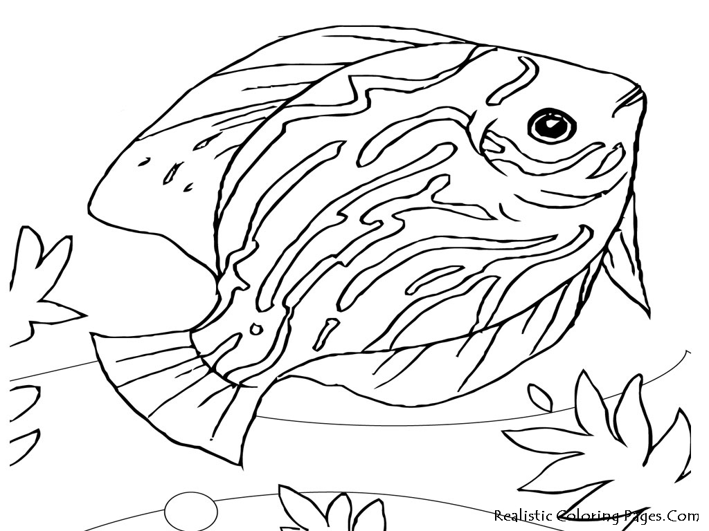 Printable Realistic Animal Coloring Pages at GetColorings ...   free coloring pages animals realistic