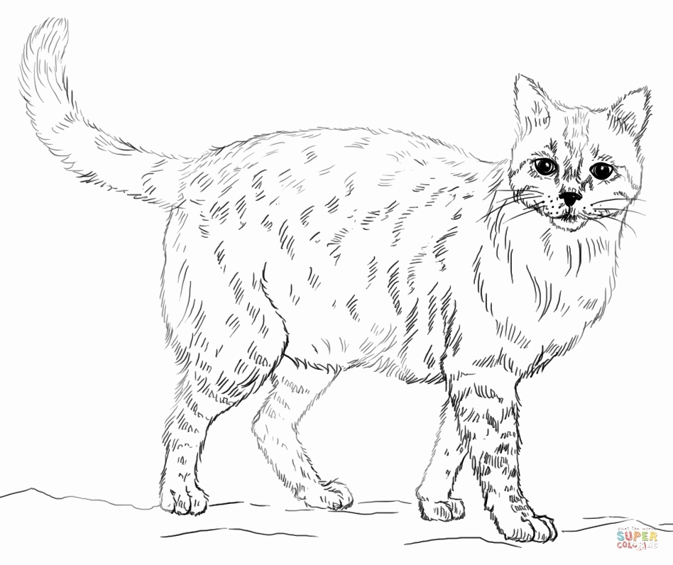 Printable Realistic Animal Coloring Pages at GetColorings ... | free coloring pages animals realistic