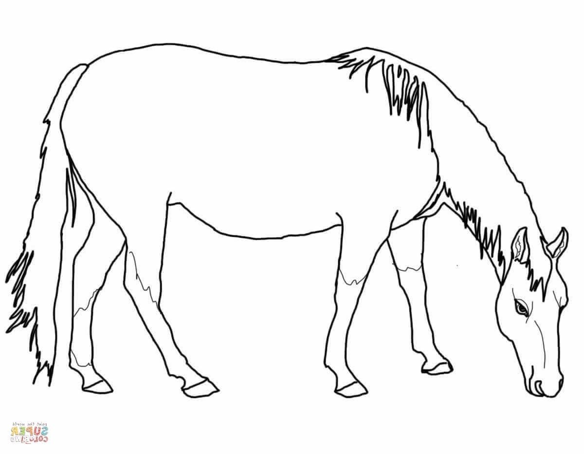 Quarter Horse Coloring Pages At Getcolorings