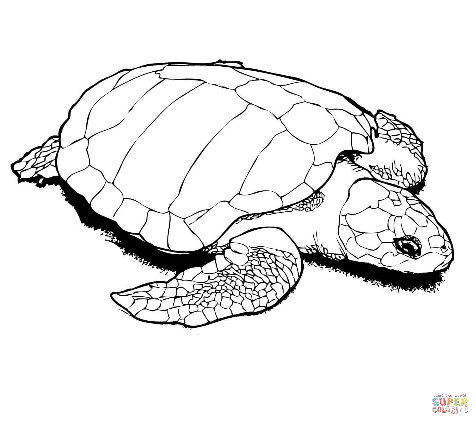 Snapping Turtle Coloring Pages At Getcolorings