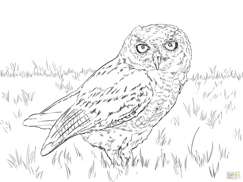 Snowy Day Coloring Page At Getcolorings