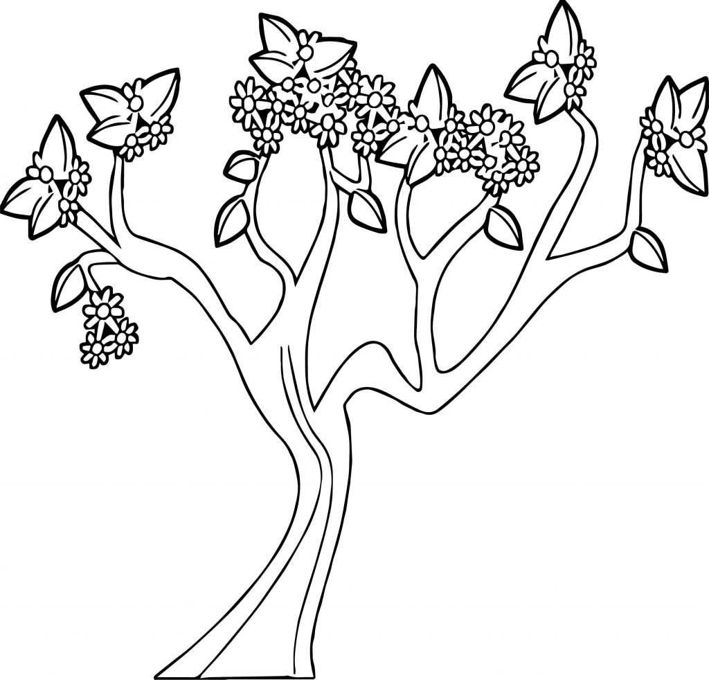 Spring Tree Coloring Page At Getcolorings