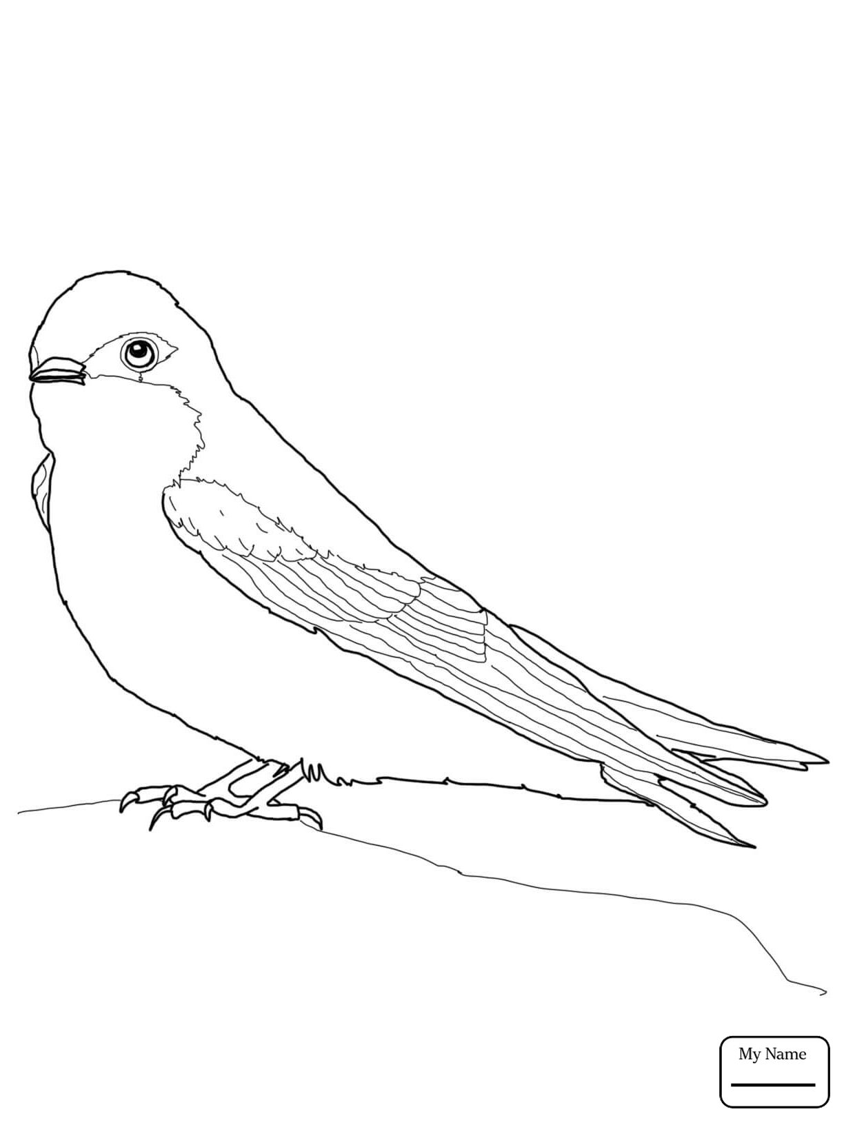 Swallow Coloring Page At Getcolorings