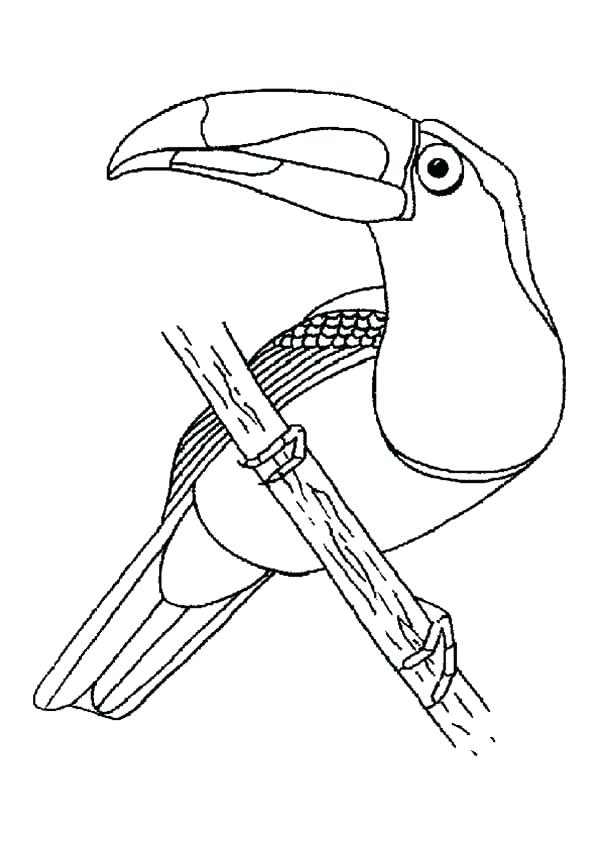 toucan coloring page at getcolorings  free printable