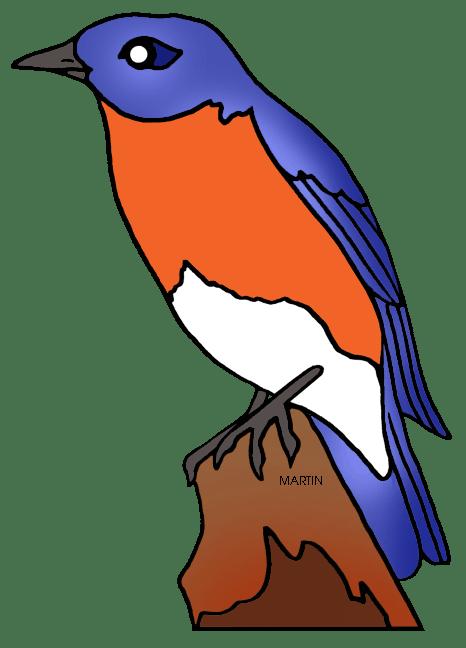 Missouri State Bird And Flower Best Bird Colletion 2018