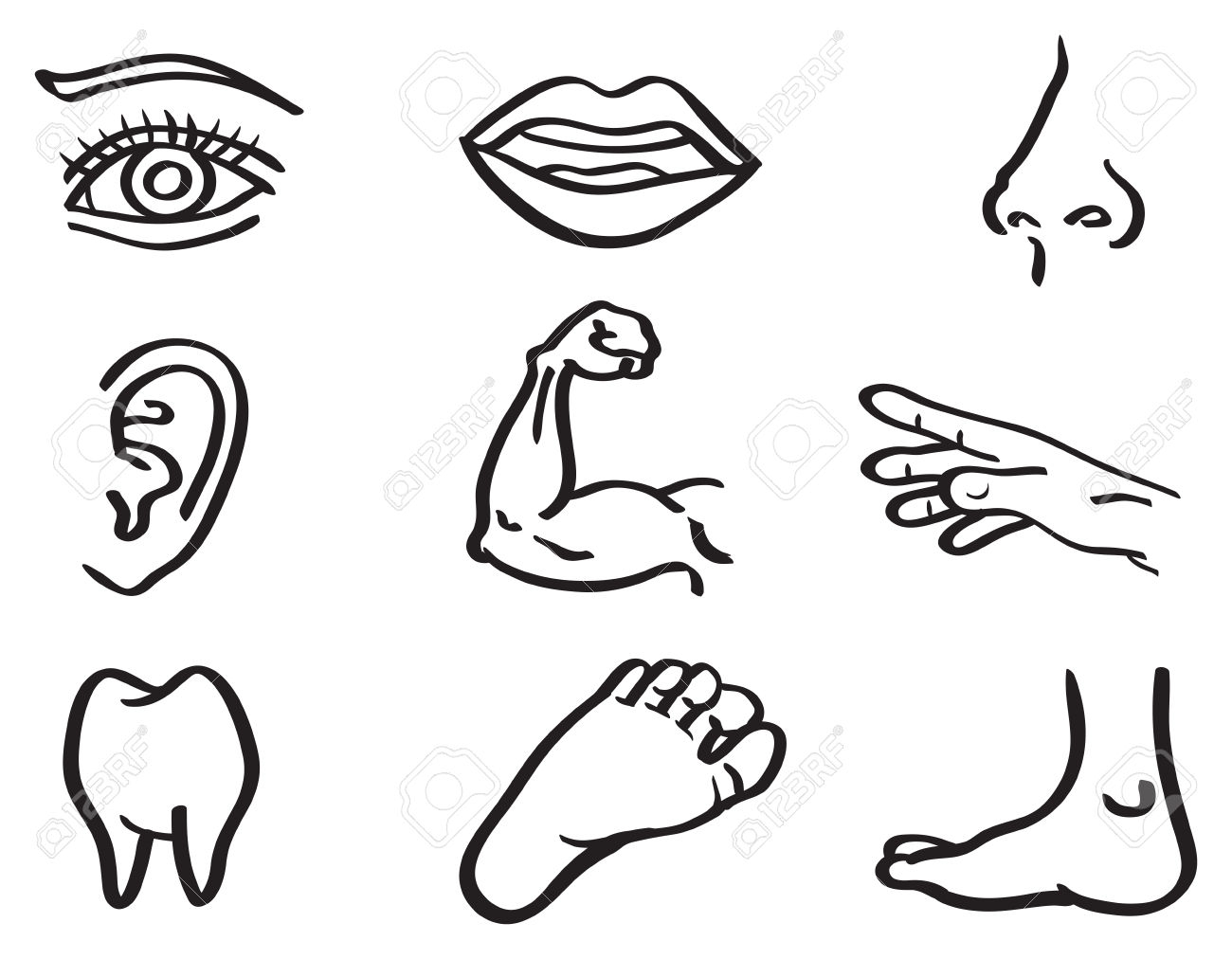Body Parts Coloring Pages At Getdrawings