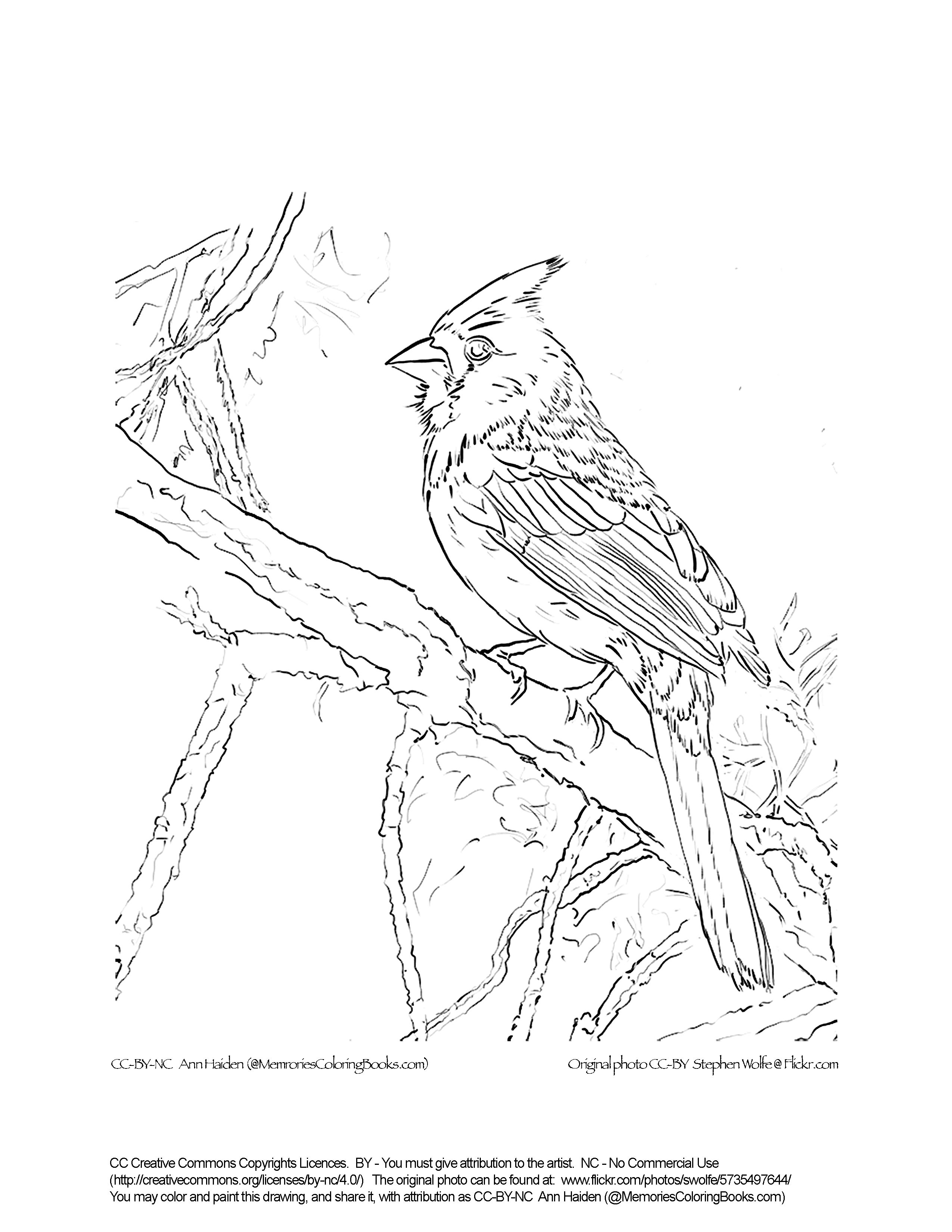 Cardinal Bird Drawing At Getdrawings