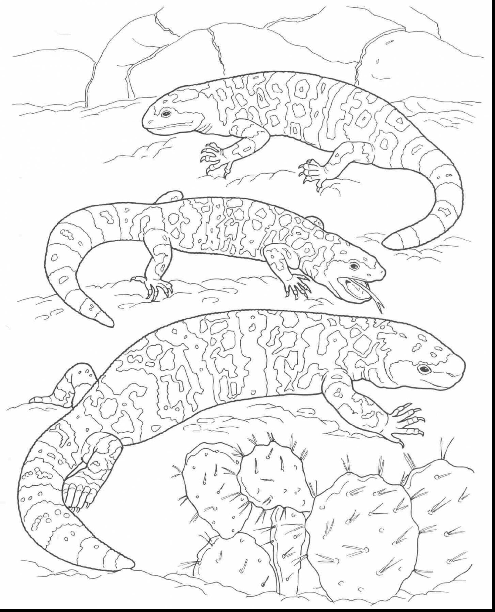 Desert Oasis Coloring Pages At Getdrawings