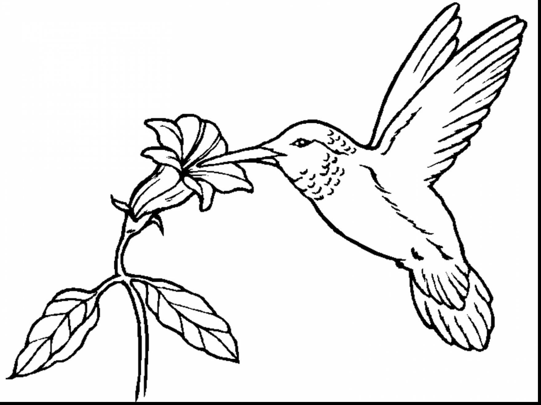 Free Printable Hummingbird Coloring Pages At Getdrawings