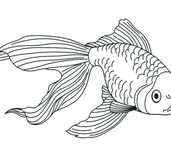 goldfish coloring page # 24