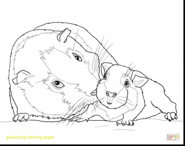 guinea pig coloring page # 35