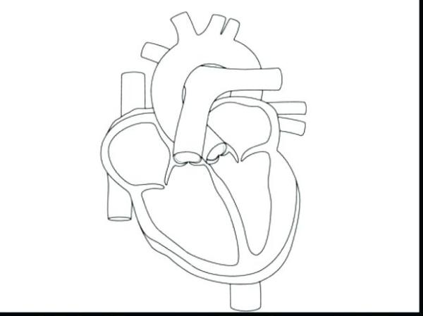 human heart coloring page # 77