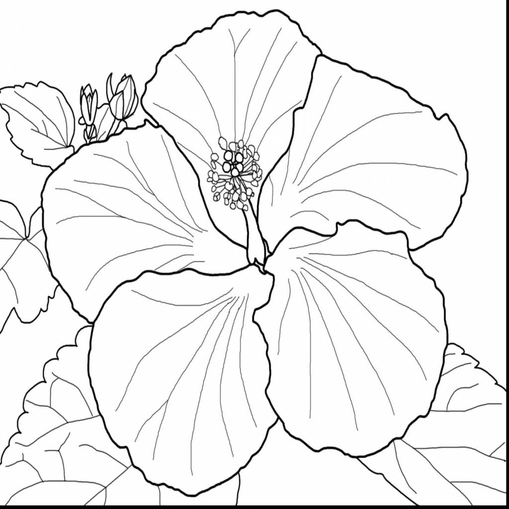 Hibiscus Flower Drawing At Getdrawings