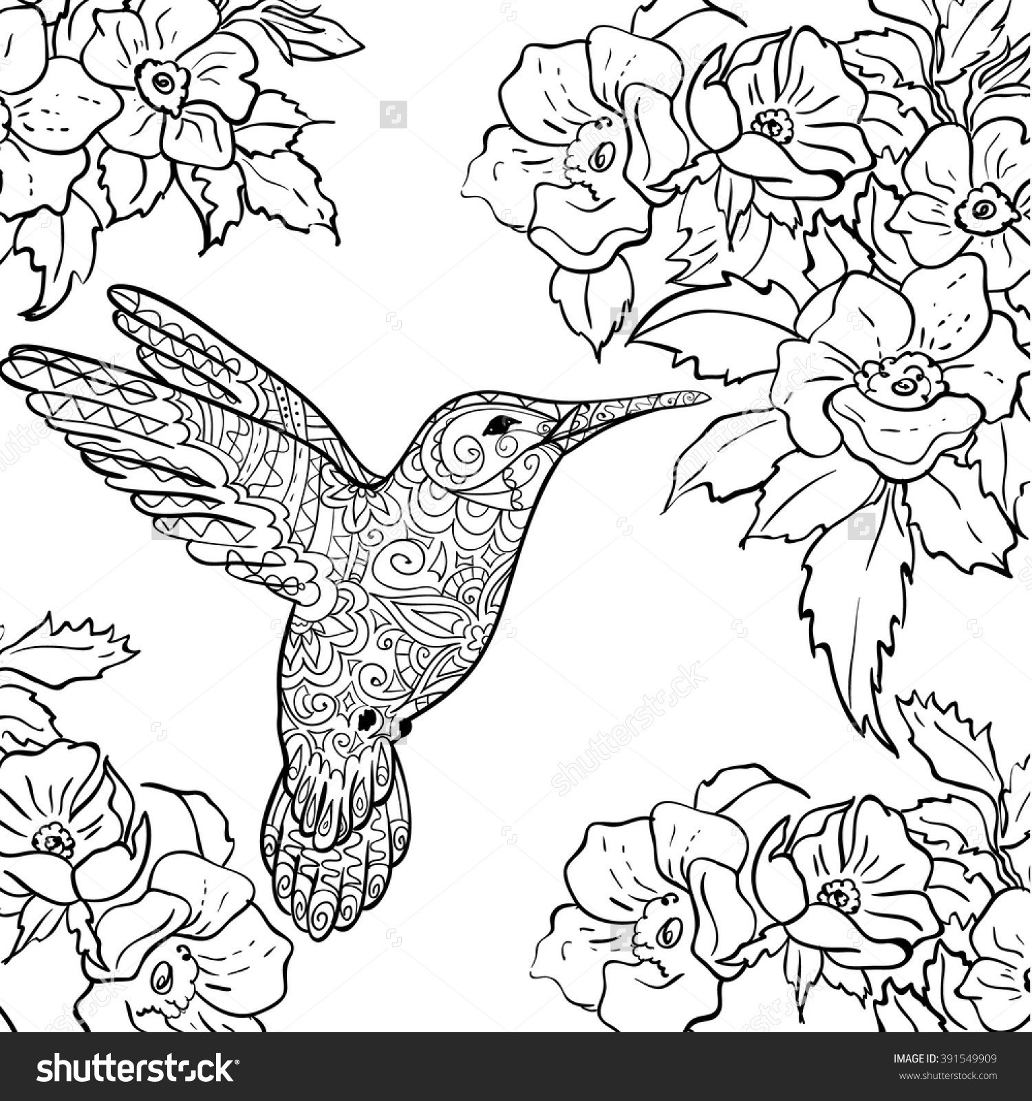 Hummingbird Coloring Pages For Adults At Getdrawings