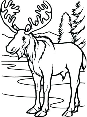 moose coloring page # 26