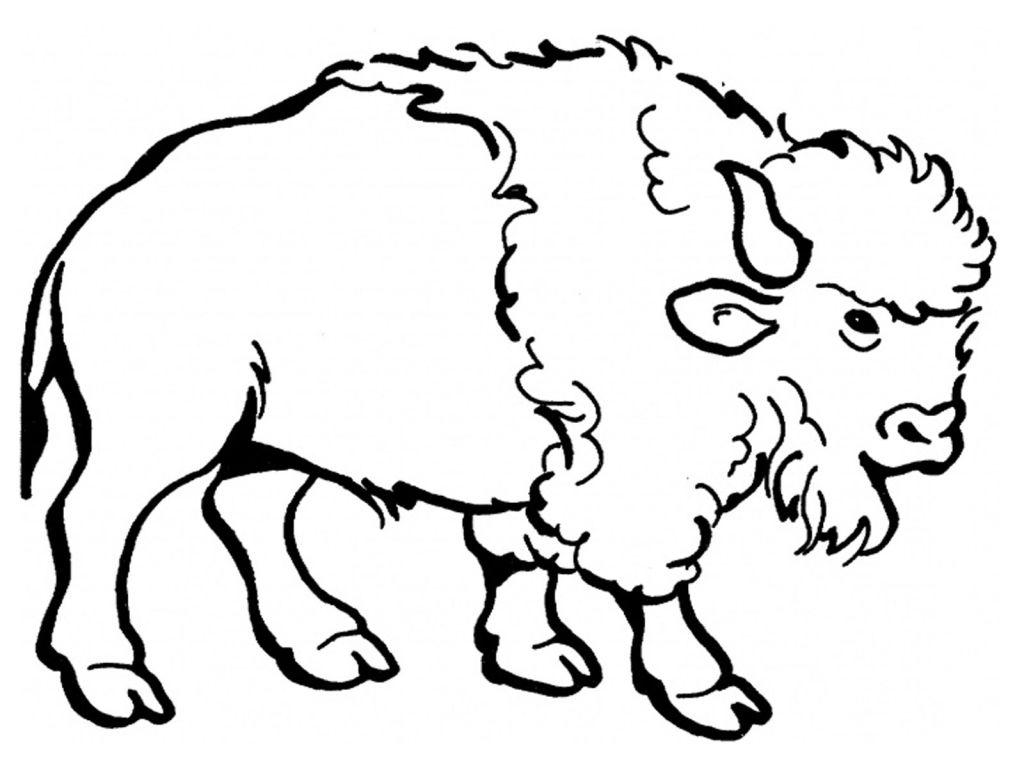 Water Buffalo Coloring Page At Getdrawings