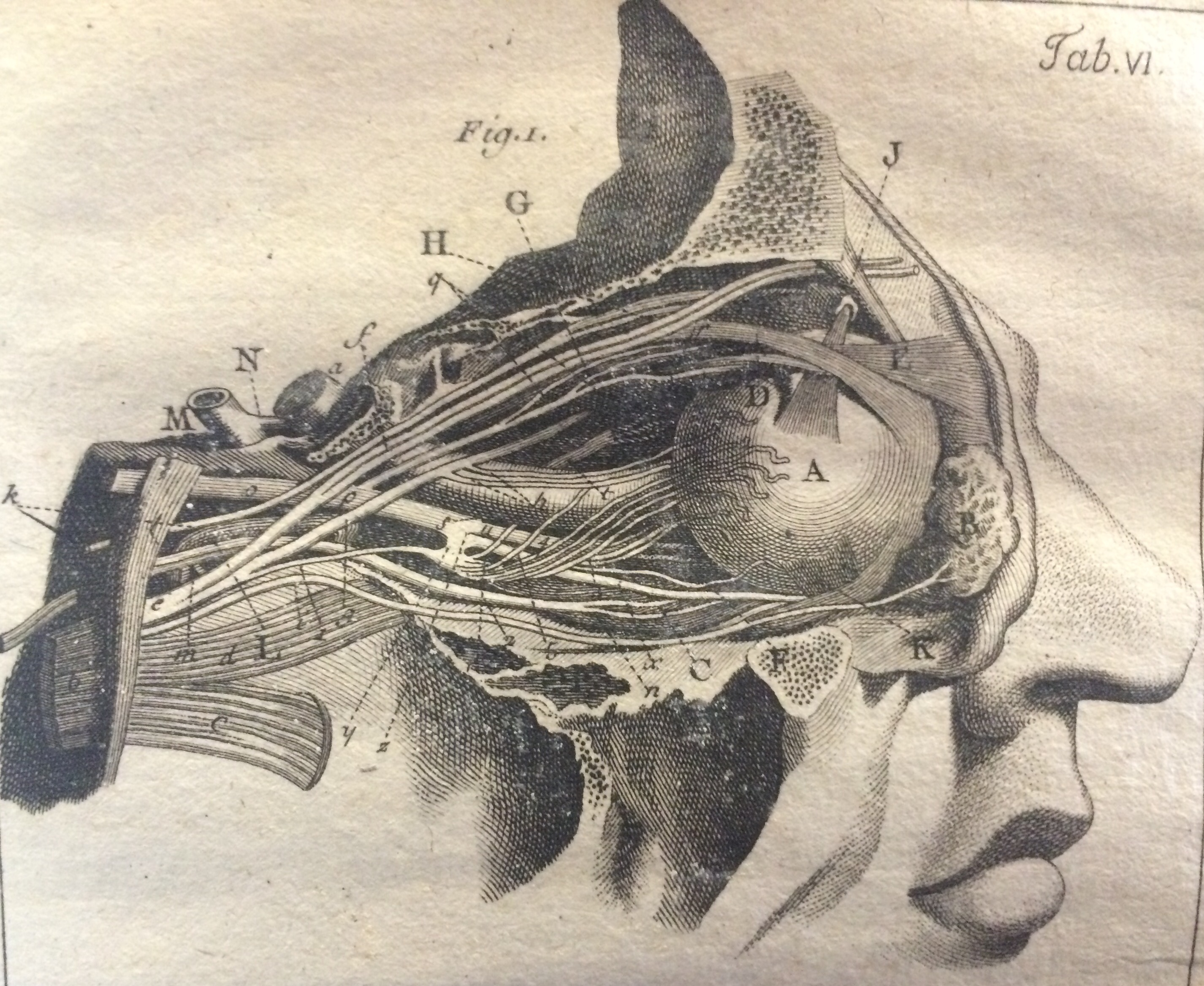Anatomy Of The Eye Drawing At Getdrawings