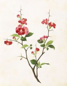 Chinese Flowers Drawing at GetDrawings com   Free for personal use     332x428                               by Yu Feian Asian Flower paintings Pinterest Asian