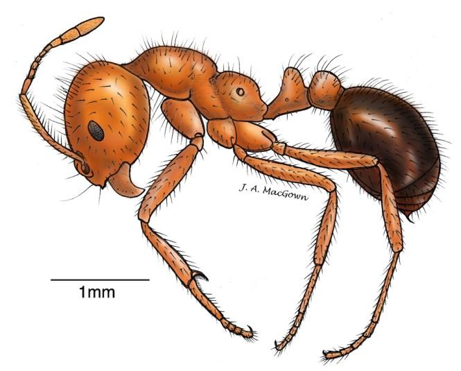 Ant Body Parts Label Worksheet 10682 Jpg