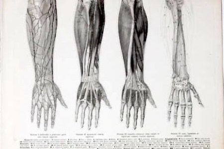 Human Anatomy Drawing Hands Path Decorations Pictures Full Path