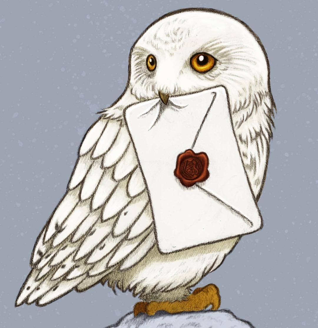 Harry Potter Hedwig Drawing At Getdrawings