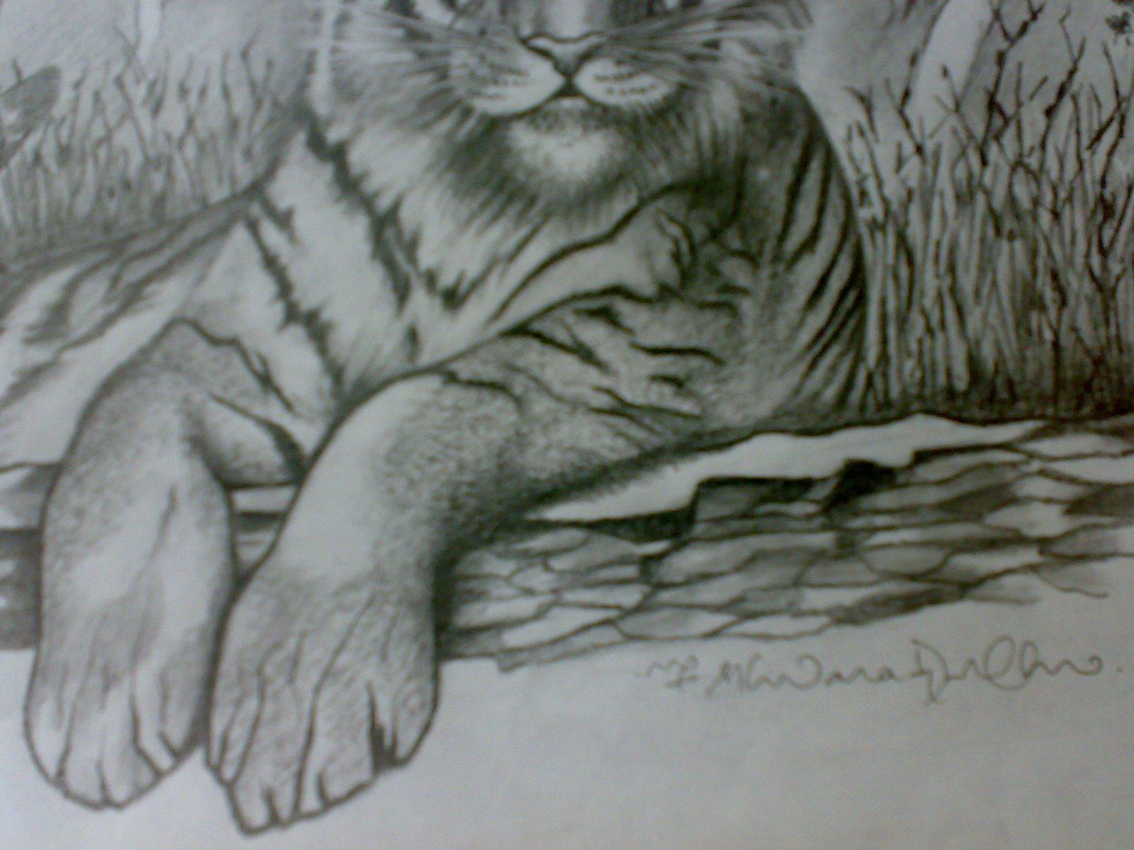 Jungle Animals Drawing At Getdrawings