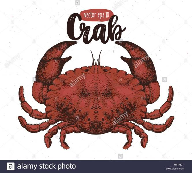 Anatomy Of A Crab – Crab