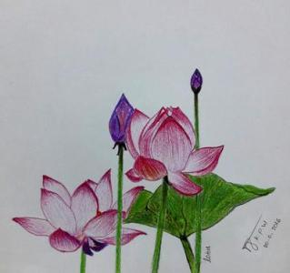 Lotus Flowers Drawing at GetDrawings com   Free for personal use     400x376 First Lotus Flower Drawing