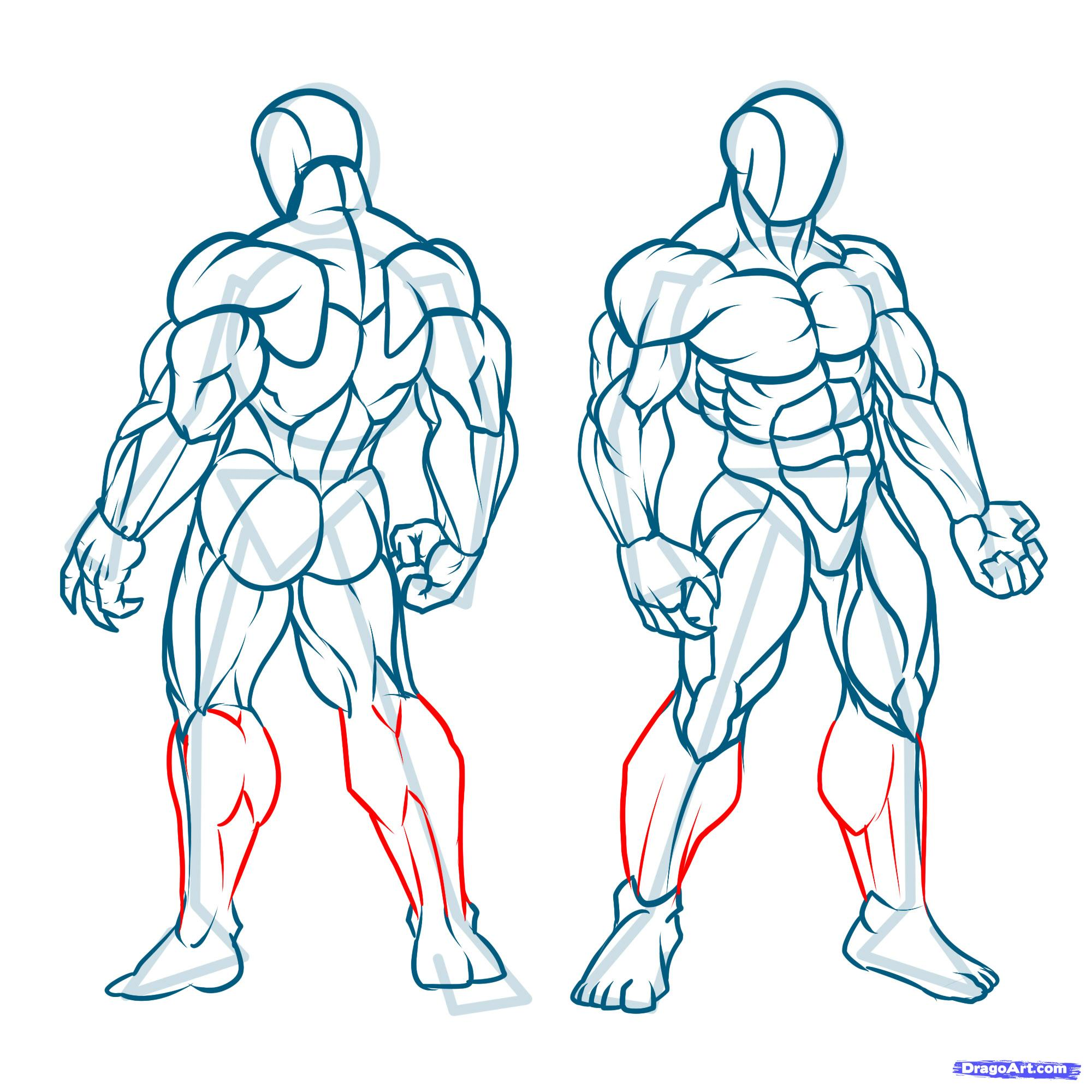 Muscle Body Drawing At Getdrawings