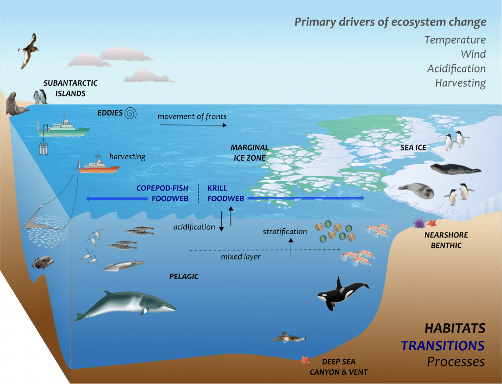 Picture Of The Ocean Ecosystem