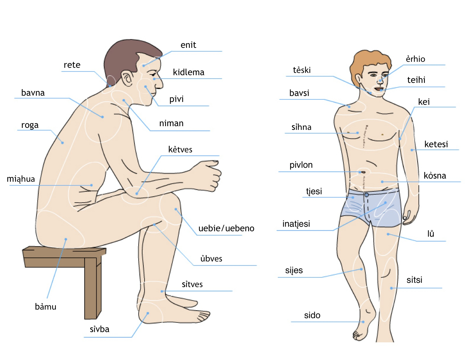 Parts Of The Body Drawing At Getdrawings