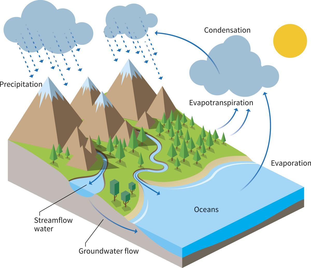 Diagram Of Water Cycle To Draw Novocom Top