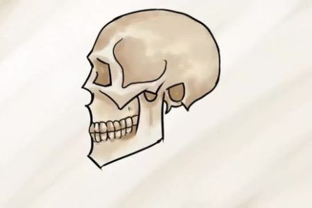Easy step by step how to draw skull and snake pics copy learn how to easy step by step how to draw skull and snake pics copy learn how to easy step by step how to draw skull and snake pics copy learn how to draw a altavistaventures Images